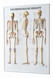 3D-Anatomie-Relieftafeln
