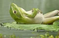 Musik-CD: Entspannung, Meditation...